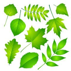 Green leaves set. Vector illustration Eps 10.