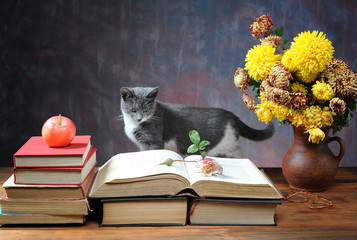Cat posing for on books and flowers