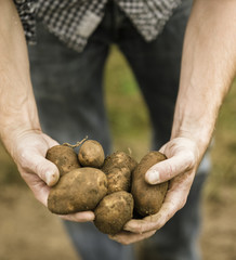 Man holding a handful of freshly picked potatoes in his hands.