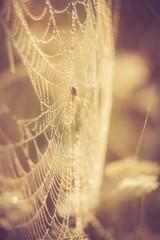 Vintage photo of spider web..