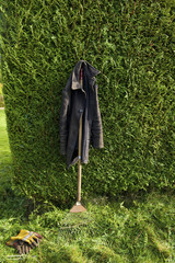 A coat hanging from a leaf rake leaning against a hedge.