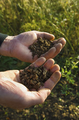 Close up of a man's hands holding soil samples.