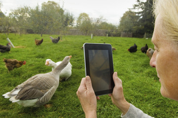 Woman holding a digital tablet, taking a photograph of geese and chicken in her chicken run.