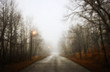 A road through the woods in winter, lit by street lights. Low mist.