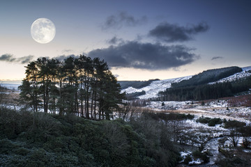 Beautiful pre-dawn Winter landscape over woodland in countryside