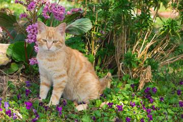 Gattino domestico fra i fiori