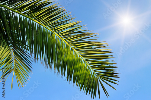 Deurstickers Palm boom leaves of tropical palm trees and blue sky