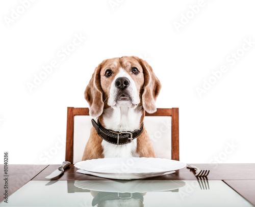 Dog waiting for a dinner on the served table - 80140286