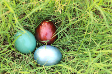 Colorful easter eggs hidden in dense grasses. Spring holidays co
