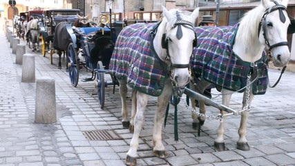 On street there is row of carriages with horses at day.