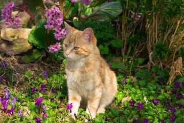 Gatto rosso nel giardino fiorito