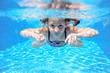 Happy girl swims in pool underwater, active kid swimming