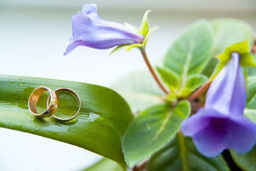 wedding rings on green pot with violet flower