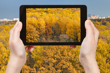 tourist photographs of yellow autumn forest