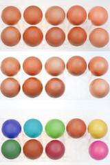 set of chicken eggs in holders