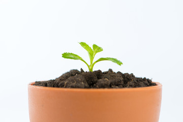 Young green tree in flower pot