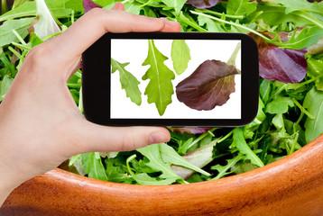 tourist photographs leafs of arugula salad