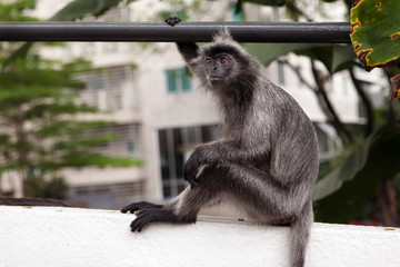 Monkey sitting in the City