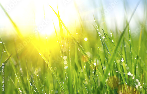 Fotobehang Platteland Grass. Fresh green spring grass with dew drops closeup