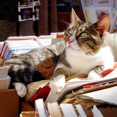Gatto di biblioteca