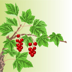 Twig with red currant  vector