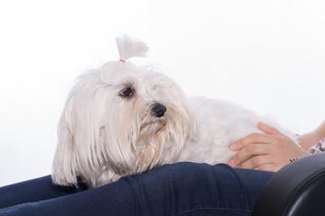 Mascota y su dueña.