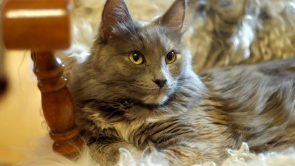 Cat resting on fluffy sheepskin closeup