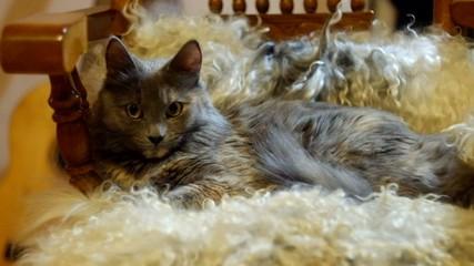 Pussy cat lying on sheepskin full HD