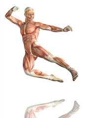 3D male figure in kick boxing pose with muscle map