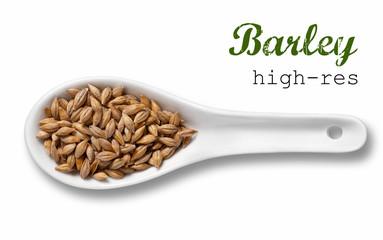 Barley in white porcelain spoon