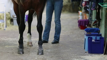 Woman combs tail of chestnut horse by brush in stable
