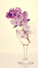 Lilac branch in a glass.