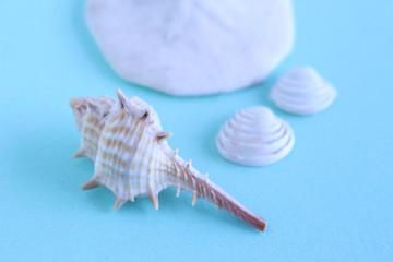 巻貝と二枚貝 海のイメージ