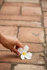 flower on the pavement with hand
