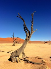 sand dunes and salt pan with dead trees in Sossusvlei in Namibia