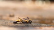Bee sucking food from water