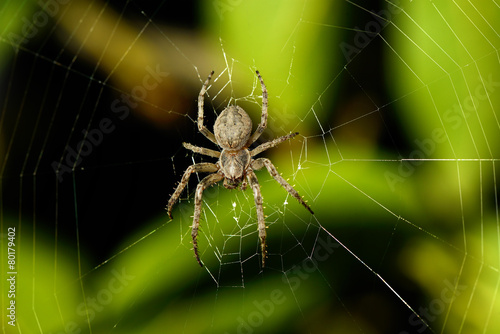 Big spider on the web - 80179402