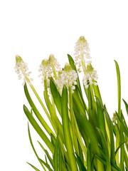 Spring gentle fresh bouquet