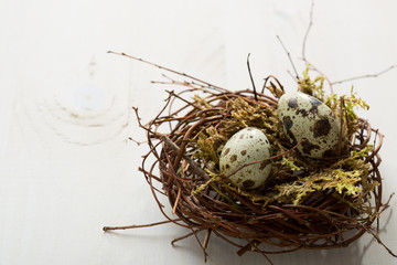 Two Quail eggs in nest on wooden table.   Easter Decor