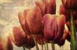 tulpen alt leinwand