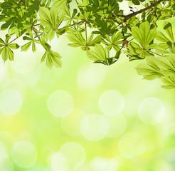 horse chestnut against defocused light green background.