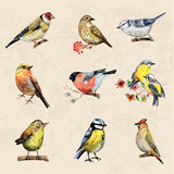 Fototapety vintage a collection of birds. watercolor painting