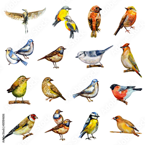 collection of birds. watercolor painting - 80184606