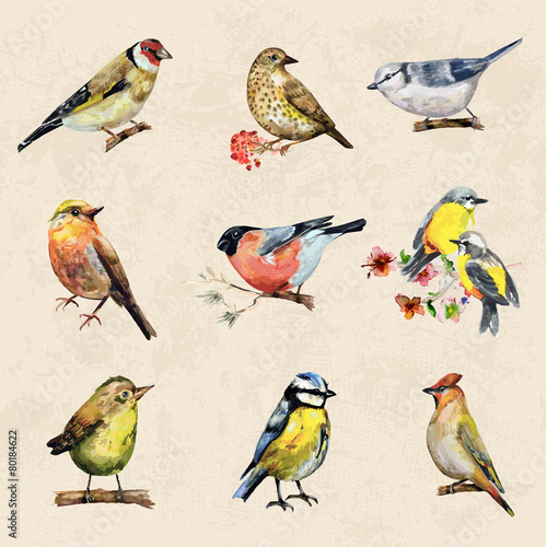 vintage a collection of birds. watercolor painting - 80184622