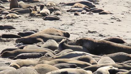 Elephant Seals 4