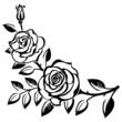 Obrazy na płótnie, fototapety, zdjęcia, fotoobrazy drukowane : Branch of roses