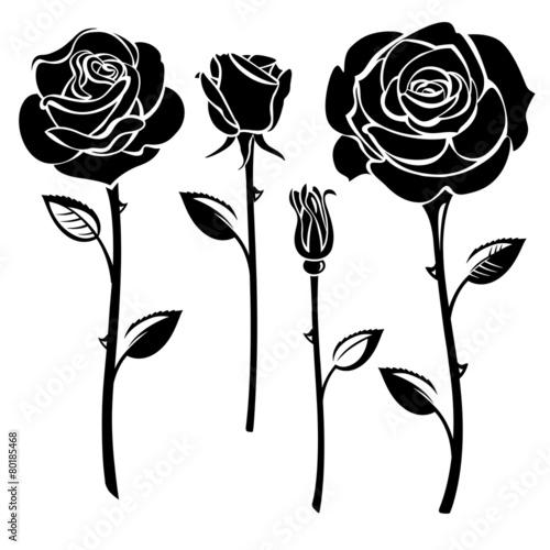 Zdjęcia na płótnie, fototapety, obrazy : Roses