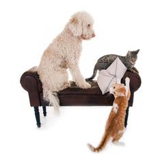 Hund und Katzen auf Bank