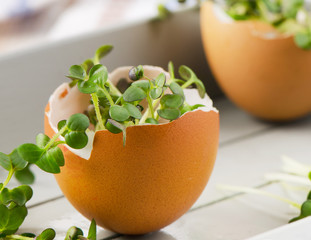 cress salad in an eggshell