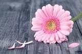 Blume pink Hintergrund